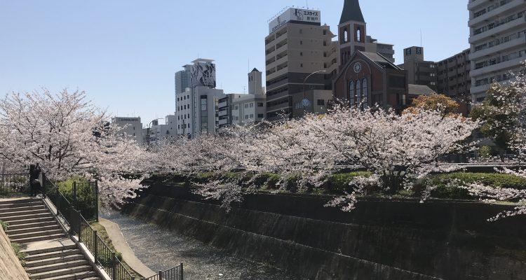 guesthouse-sakura-2020-1