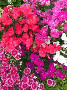 kobe-herb-garden-2